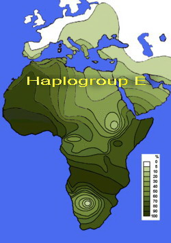 Y DNA haplogroup E Changed According to Surroundings!