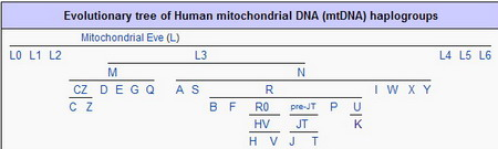 mtDNA haplogroups